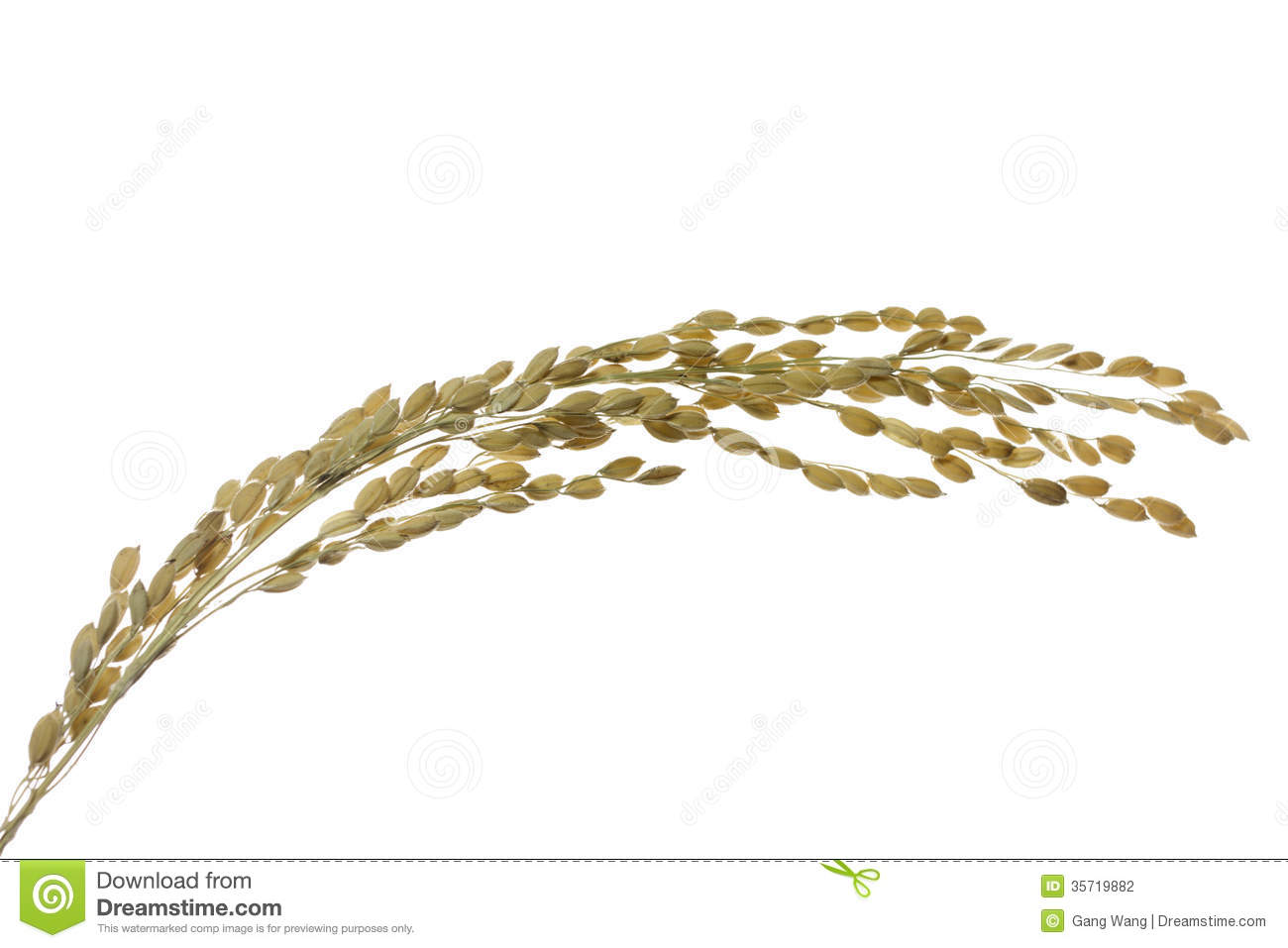 Grain Of Rice Clipart.