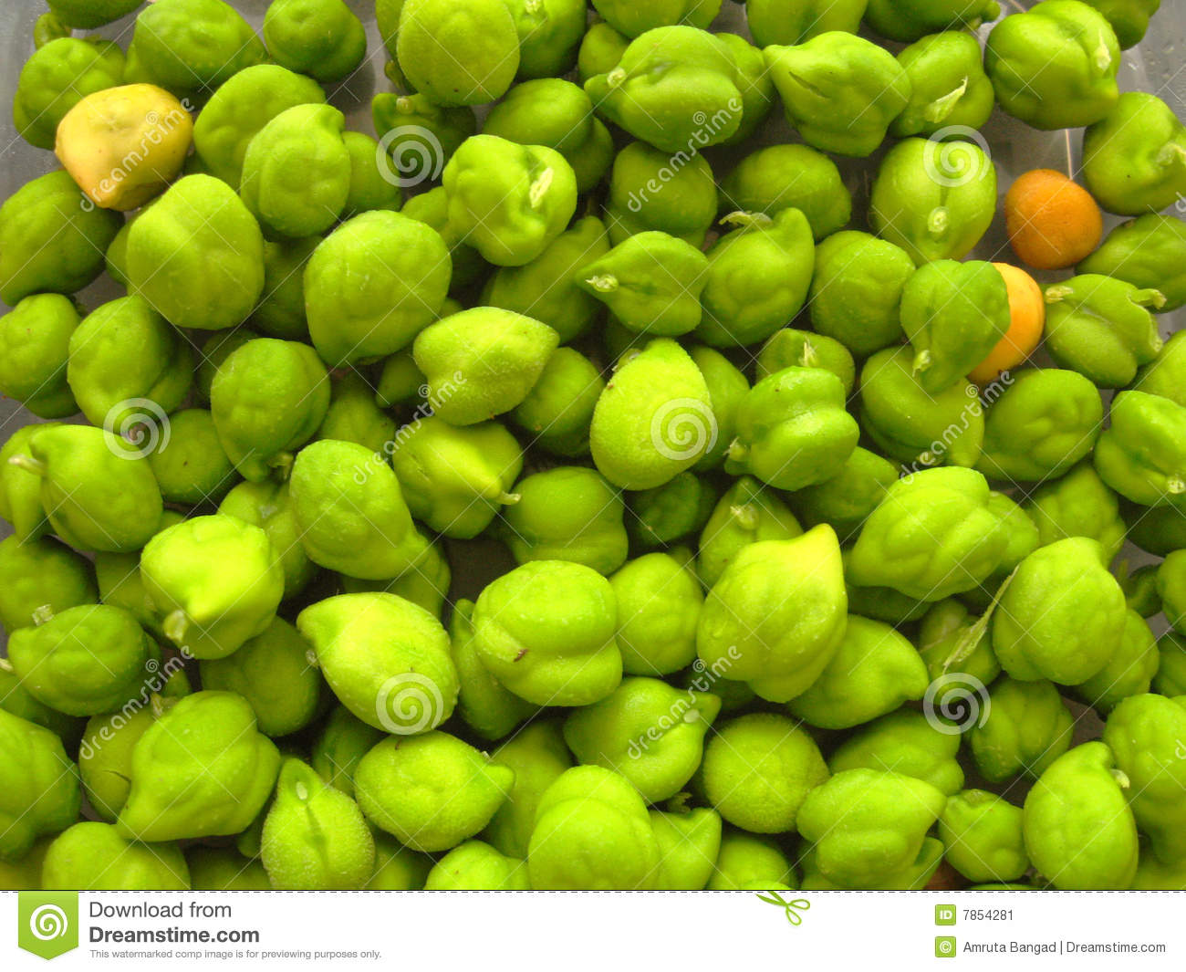 Green Gram Pulse Royalty Free Stock Images.