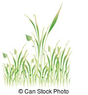 Gramineous Clipart and Stock Illustrations. 7 Gramineous vector.