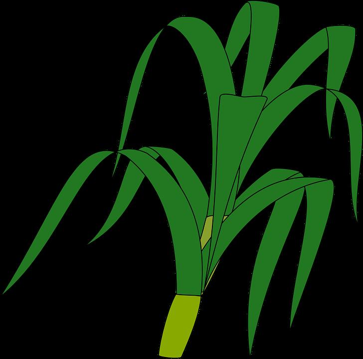 Grass, Plant.