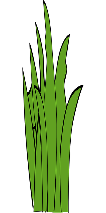 Free vector graphic: Blades Of Grass, Grass, Weed.