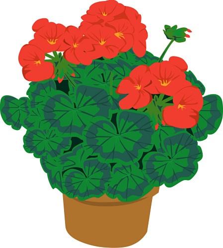 1000+ images about Vintage geranium on Pinterest.