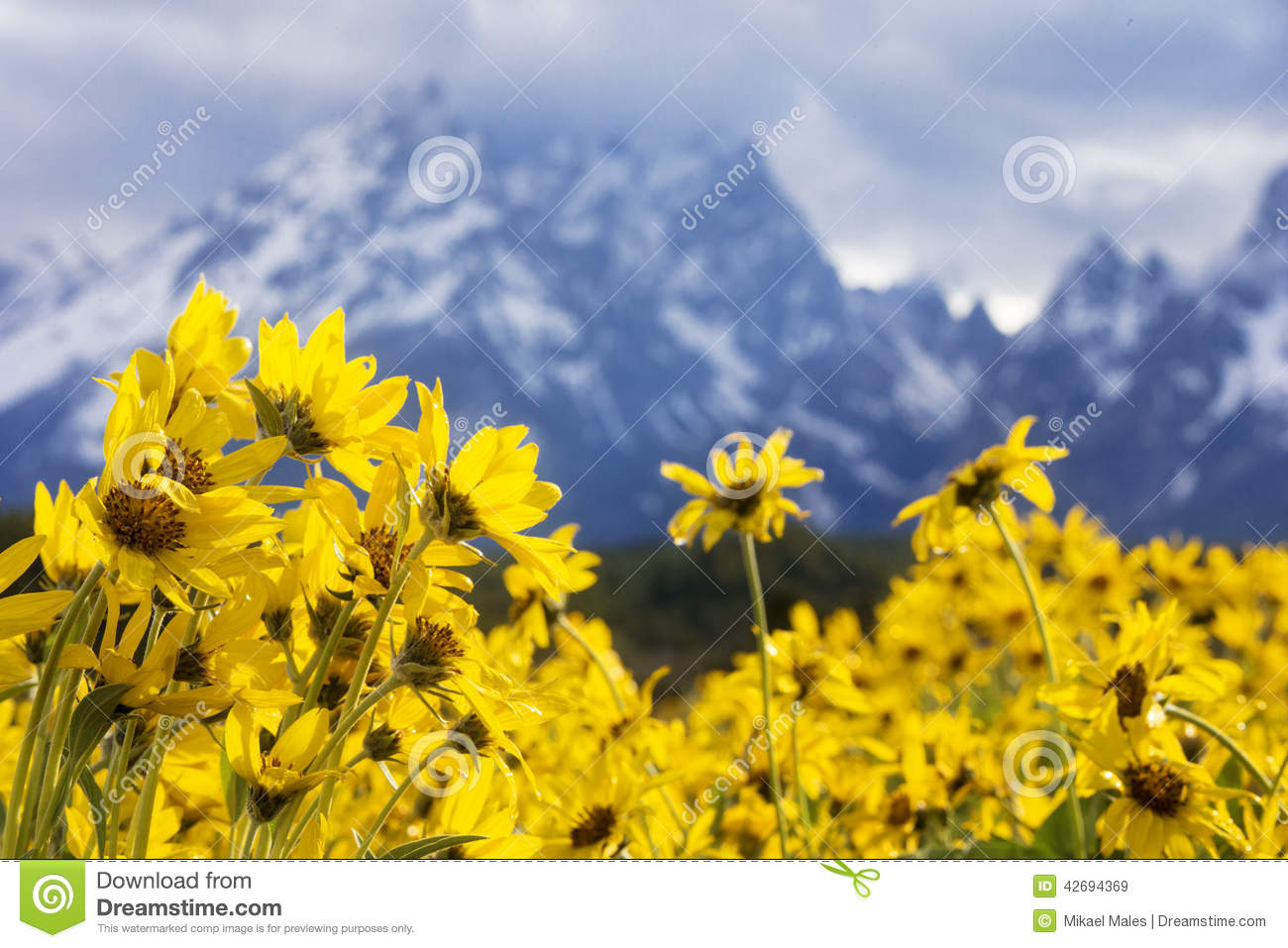 Grand Teton Mountains With Flowers In Foreground Stock Photo.
