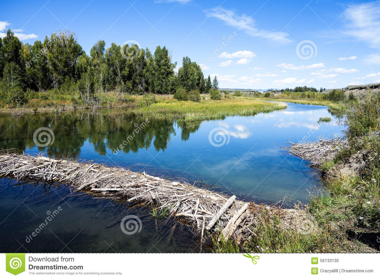 Beaver Dam, Grand Teton National Park, Wyoming Stock Photo.