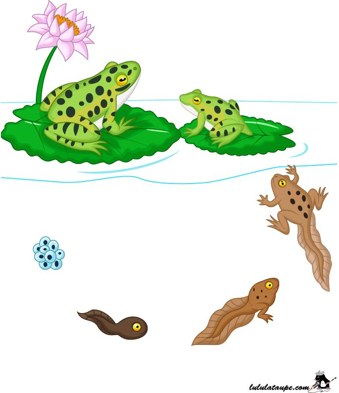 1000+ ideas about Image Grenouille on Pinterest.