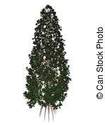 Grandiflora Clipart and Stock Illustrations. 19 Grandiflora vector.