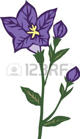 Grandiflorus Cliparts, Stock Vector And Royalty Free Grandiflorus.
