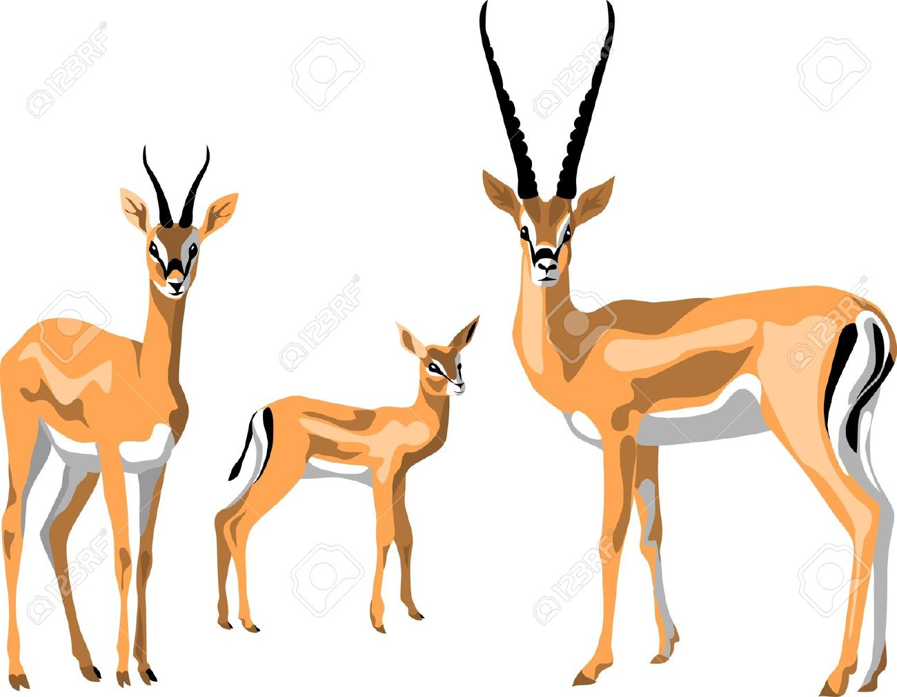 Grant Gazelle Family Royalty Free Cliparts, Vectors, And Stock.