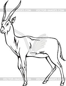 s gazelle.