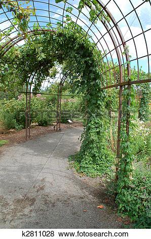 Pictures of Grape Arbor k2811028.