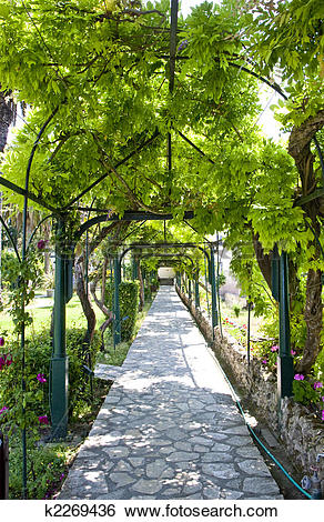Stock Images of Grape Arbor in Greece k2269436.