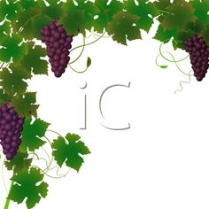 Grapes tree clipart.