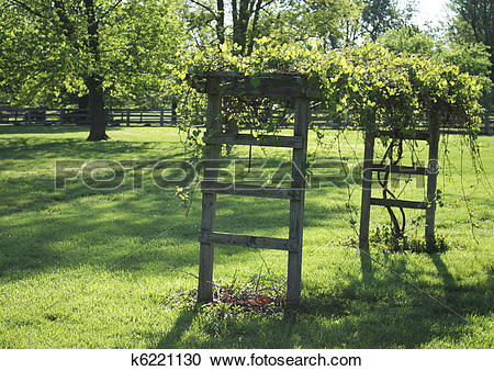 Stock Photography of Grape arbor k6221130.