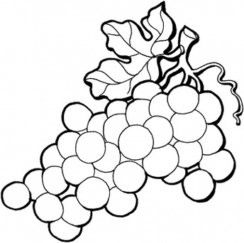 Free Grapes Clipart Black And White, Download Free Clip Art.