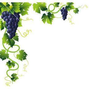 Grapevine Clip Art.