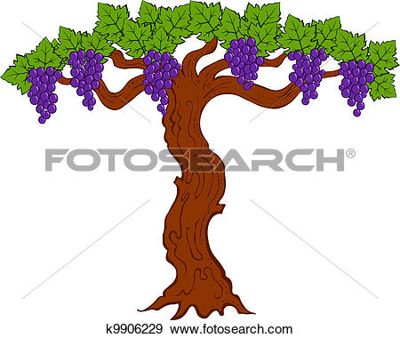 Clip Art of painted grapes and leaves on a tree k9906229.