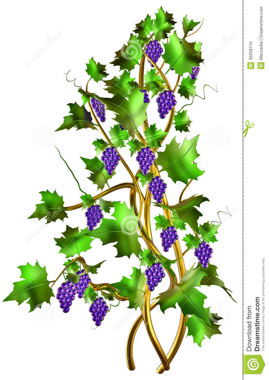 Shrub With Fresh Grapes And Leaves For Winemaking. Stock Photo.