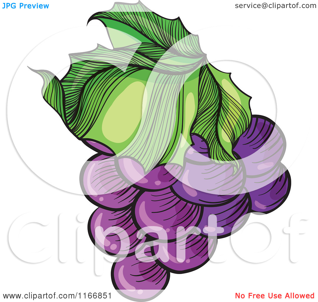 Cartoon of a Bunch of Purple Grapes.