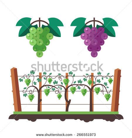 Grape Tree Stock Vectors, Images & Vector Art.