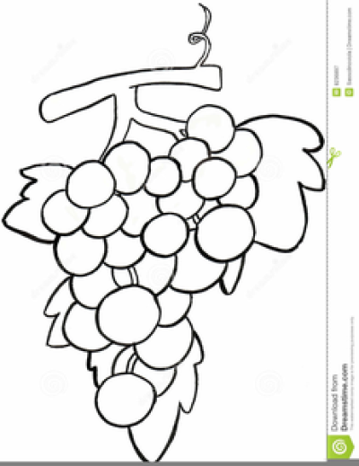 Grape Clipart Black And White PNG.
