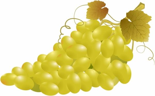Free clipart grape vineyard free vector download (3,463 Free.