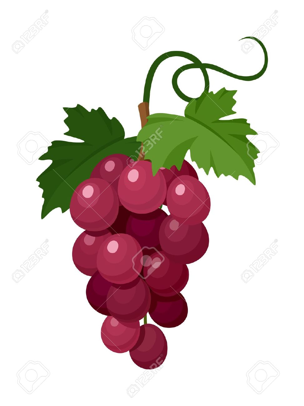 4,698 Grapevine Stock Vector Illustration And Royalty Free.