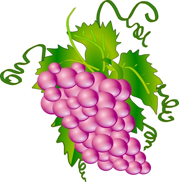 Grapes clip art Free vector in Open office drawing svg ( .svg.