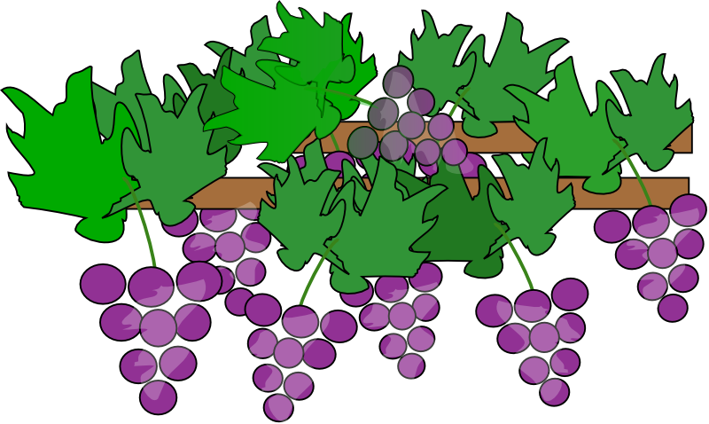 Grape Plant Clipart.