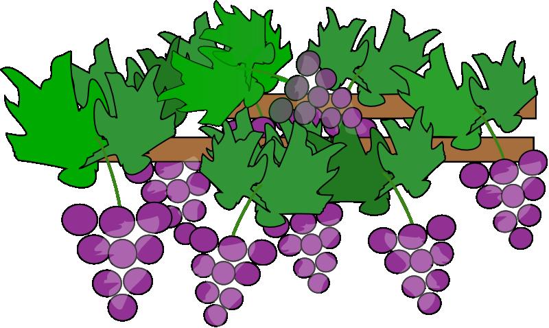 Grape Plant Clipart.