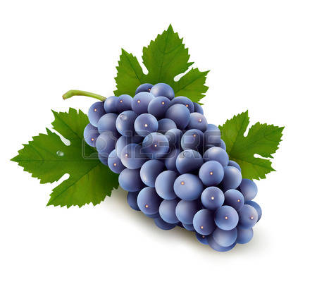 2,972 Grape Crop Stock Vector Illustration And Royalty Free Grape.