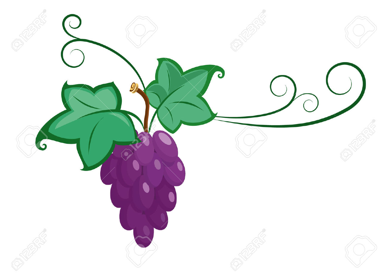 Vector Grape Branche Illustration Royalty Free Cliparts, Vectors.