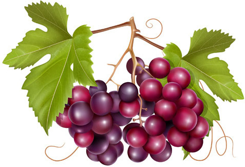 Grape wine clip art free vector download (212,709 Free vector) for.