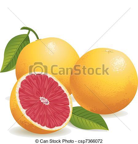 Grapefruits Clipart and Stock Illustrations. 2,397 Grapefruits.