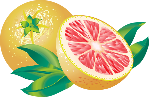 Grapefruit Clipart.