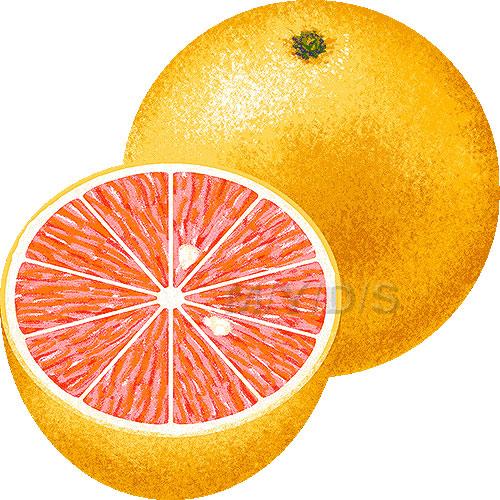 Grapefruit clipart / Free clip art.