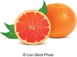 Grapefruit Clipart and Stock Illustrations. 2,402 Grapefruit.