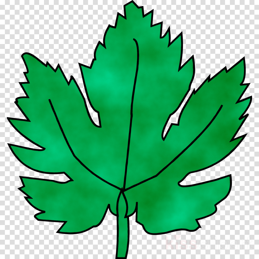 Green Leaf Backgroundtransparent png image & clipart free download.