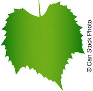 Grape leaf Clipart and Stock Illustrations. 8,984 Grape leaf.