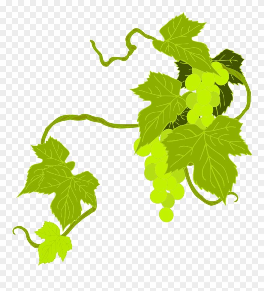 Onlinelabels Clip Art Grapes.