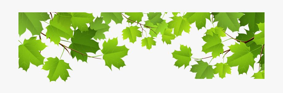 Grape Leaves Clipart.
