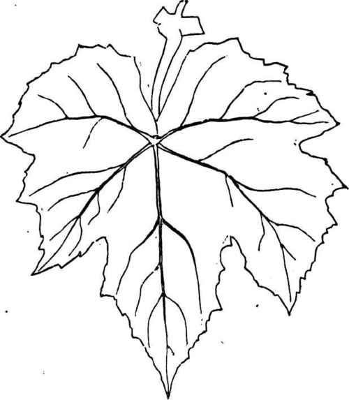 grape leaf template printable.