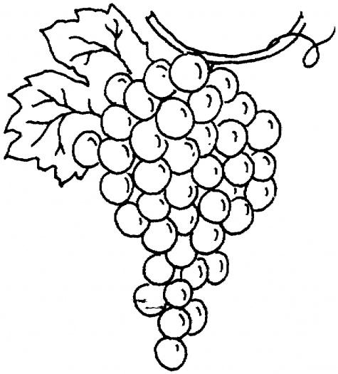 Grape Outline.