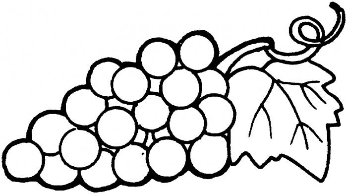 Grapes Drawing.