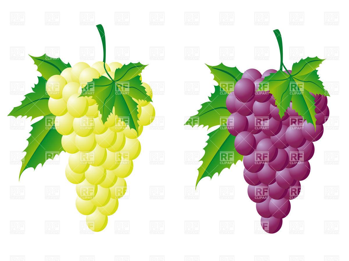 Grapes grape art on grape vines clip art free and clip art 3.