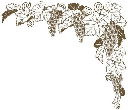 6,717 Grapevine Stock Vector Illustration And Royalty Free Grapevine.