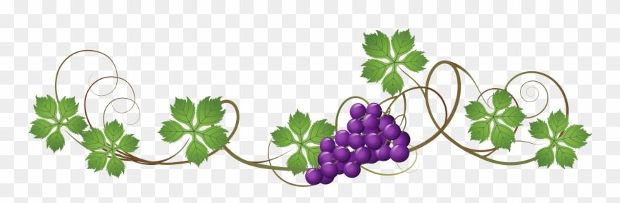 Grape Vine Transparent Background Clipart (#2113738).