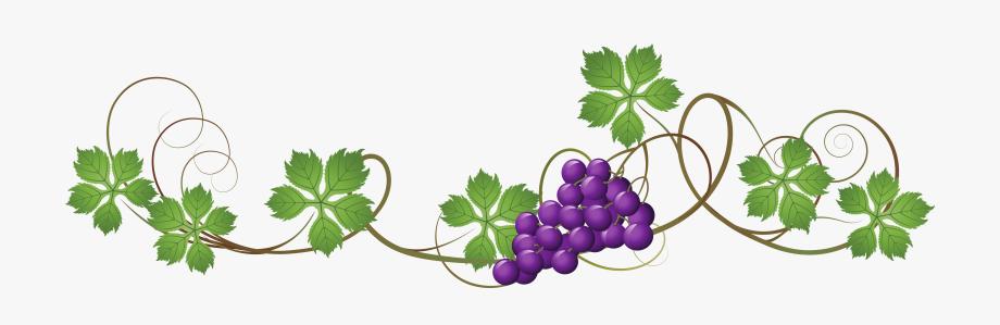 Clip Stock Vines Clipart Grapevine.