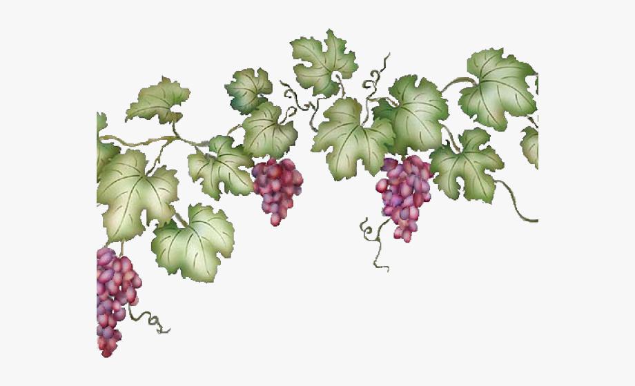 Download High Quality grape clipart vine Transparent PNG.