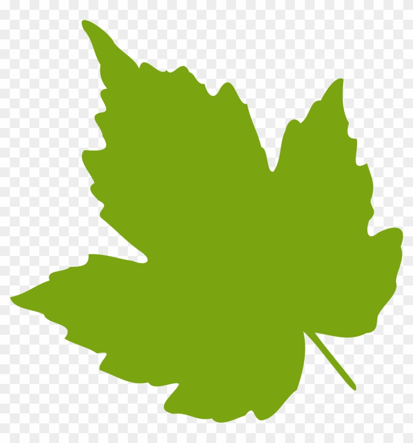 Grape Vine Leaves Clip Art.