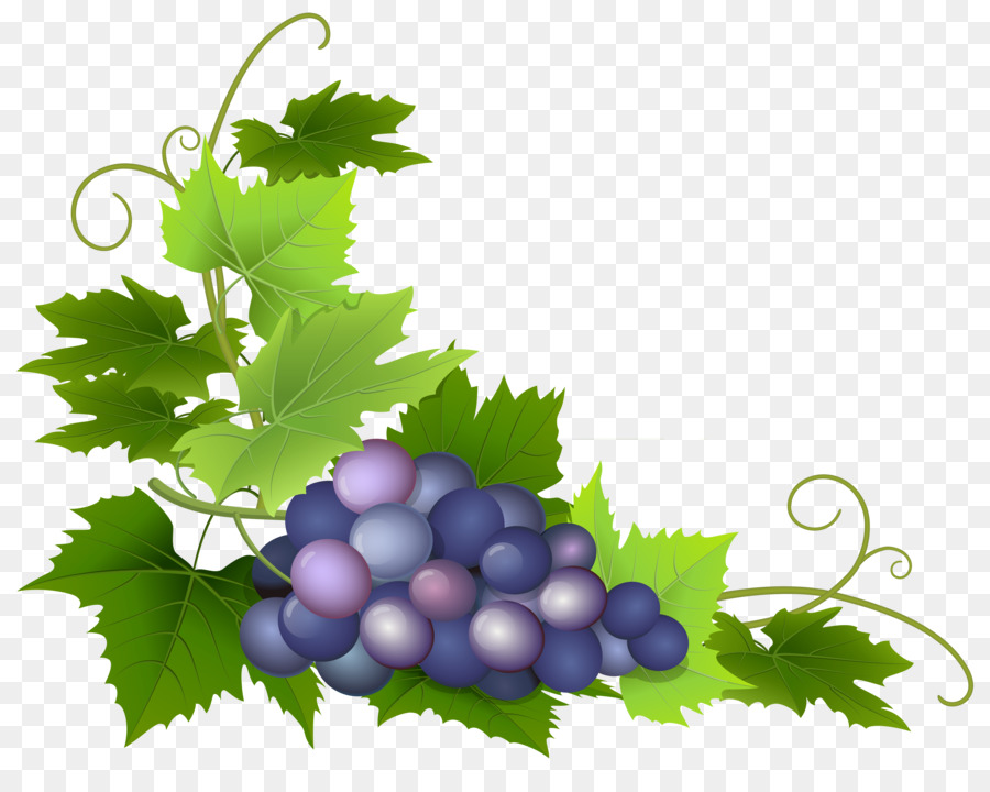 Grape Cartoon png download.
